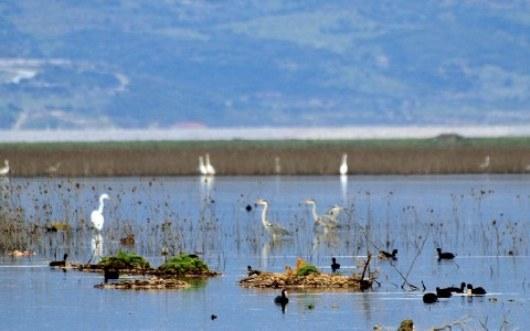 """Ημερίδα για την Προστασία και τη Διατήρηση της Βιοποικιλότητας της Περιοχής Οικοανάπτυξης Κάρλας – Μαυροβουνίου – Κεφαλόβρυσο – Βελεστίνου"""" του Ε.Π.""""Περιβάλλον Αειφόρος Ανάπτυξη 2007-2013"""""""