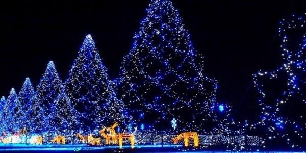 Χριστουγεννιάτικη Γιορτή Κοινωνικής Αλληλεγγύης