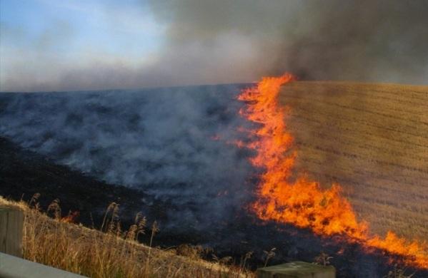 Πυροσβεστική Διάταξη για μέτρα πρόληψης και αντιμετώπισης πυρκαγιών σε δασικές και αγροτικές εκτάσεις