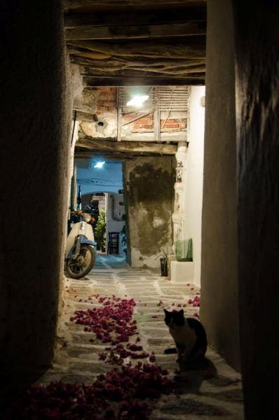 φωτογραφία του 2ου Διαδικτυακού Διαγωνισμού Φωτογραφίας που προκήρυξε ο Δήμος Ρήγα Φεραίου με θέμα «Γωνιές – γειτονιές»