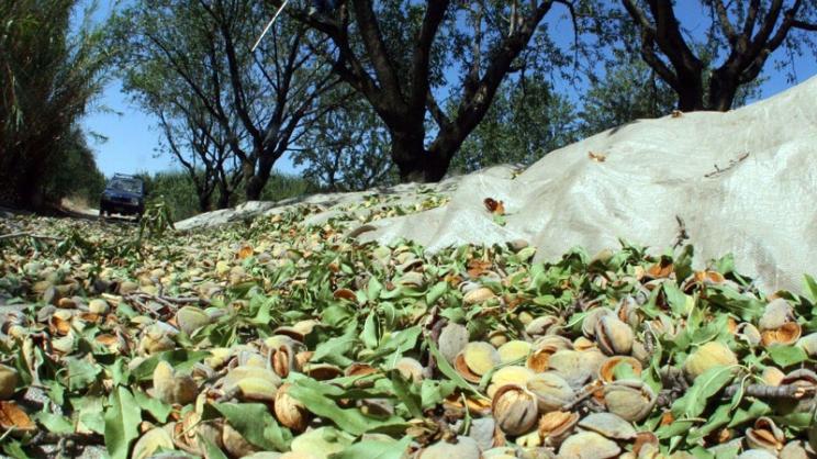 Αίτημα Δημάρχου Ρήγα Φεραίου να ενταχθεί η ζημιά των παραγωγών αμυγδαλιάς σε πρόγραμμα ΠΣΕΑ