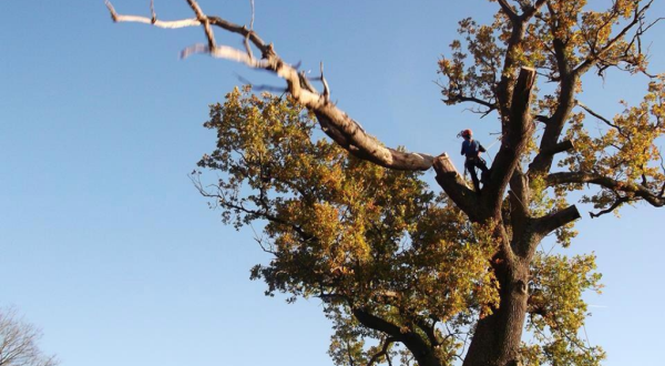 Πρόσκληση ενδιαφέροντος για την κοπή δέντρων στην Κεντρική Πλατεία Περιβλέπτου έως 08/12/2017