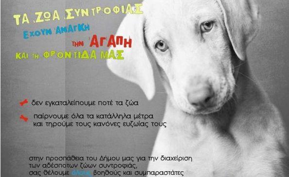 Ο Δήμος Ρήγα Φεραίου ενημερώνει και ευαισθητοποιεί του μαθητές για τα ζώα
