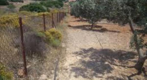 Πρόσκληση ενδιαφέροντος για τις «Περιφράξεις ιδιοκτησιών Δήμου Ρήγα Φεραίου»