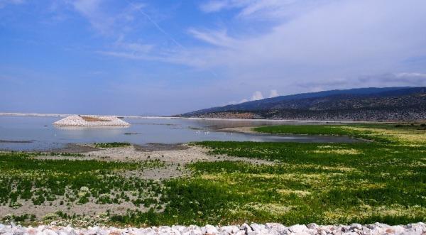 Παραχώρηση των εναπομεινάντων δημοσίων εκτάσεων περιμετρικά της Λίμνης Κάρλας σε κατά κύριο επάγγελμα αγρότες για καλλιέργεια