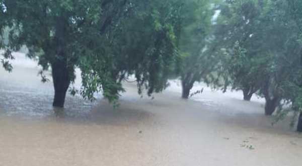 Ο Δήμος Ρήγα Φεραίου σε συνεχή επικοινωνία με τον ΕΛΓΑ για τις καταστροφές των καλλιεργειών στις πληγείσες περιοχές του Δήμου