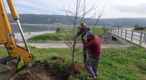 Δενδροφύτευση στην Κάρλα, μία πρωτοβουλία συνεργασίας και εθελοντισμού για ένα πολύ σημαντικό σκοπό