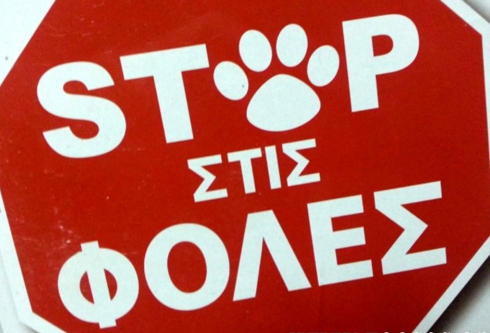 Τη θανάτωση αδέσποτου ζώου καταγγέλλει η Δημοτική Αρχή Ρήγα Φεραίου
